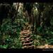 Uganda-rwenzori-forest-trail