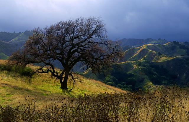 Lone Oak, Santa Clarita