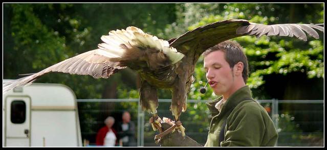 Comparação do tamanho de águias  com relação ao homem. 931070981_f42eb7a688_z