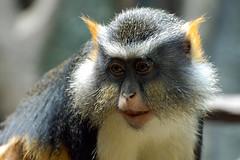 zoo_monkey
