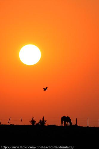 sunset pordosol horse silhouette brasil backlight canon contraluz landscape caballo rebel gold bolivar paisagem dourado hino cavalo semana riograndedosul trindade silhueta farroupilha riograndense xti semanafarroupilha duetos bolivartrindade superdueto bolivartrindade©allrightsreserved