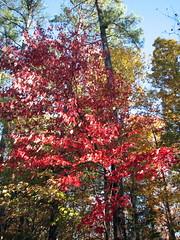 Autumn Colors Lake Crabtree NC 0441