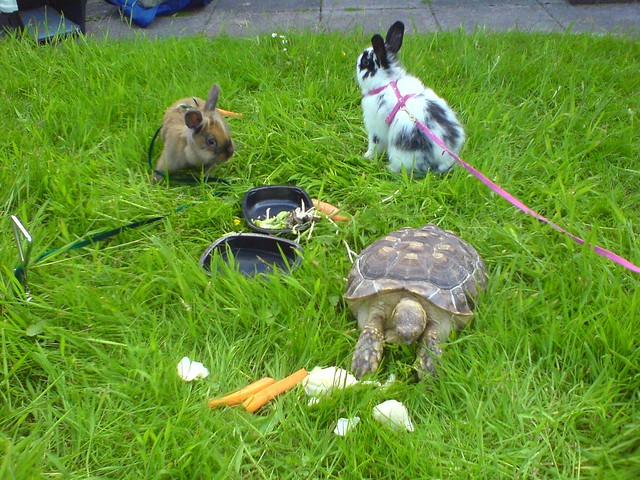 Pets In The Garden Flickr Photo Sharing