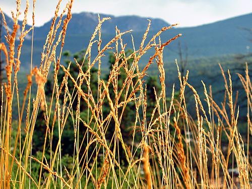 canada golden grass mountain nature britishcolumbia 2007 happysleepy magdawojtyra happysleepycom artistlife