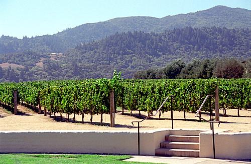 Mondavi Winery - Vineyard