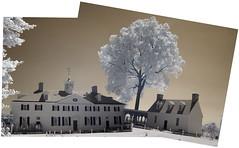 Mount Vernon and Pecan Tree