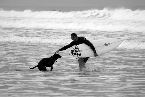 surfers best friend by +gAbY+