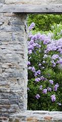 fleursandwall