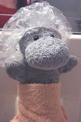 Hippo Is Ready For A Bath