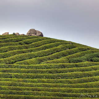 Tea Mountain: Zen