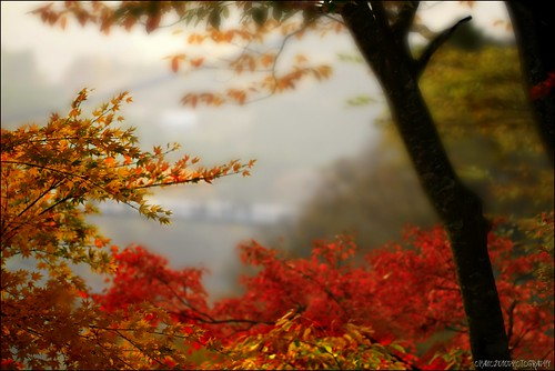 EXPLORED. Momiji 3 ~The Colors Of Fall