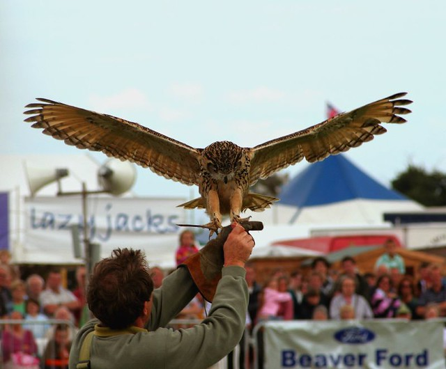 The Eagle Owl Has Landed!