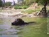 Rocco Jovo nadando