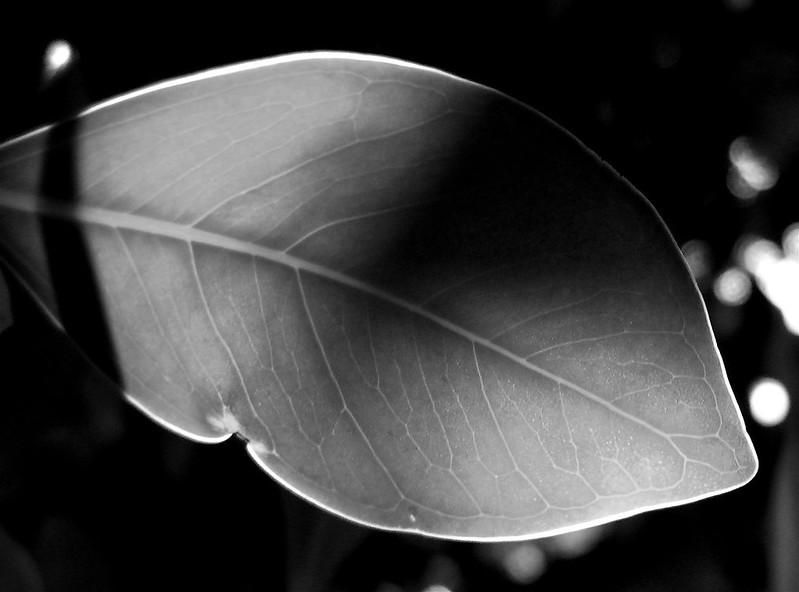 leaf@tree