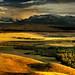 Golden Alberta by Su Inc