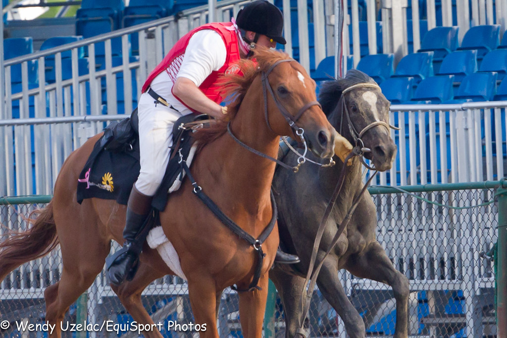 pimlico outrider catches Diva Delite after unseating the rider.