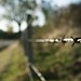 country road, country fence