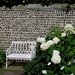 white hydrangeas & bench by Dasha_K