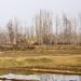 Kashmir I 010