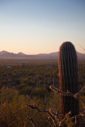 arizona desert tucson saguaronationalpark sonorandesert saguarocactus signalhillpicnicarea bajadaloopdrive