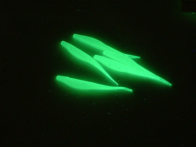 bright green glow in the dark fishing lures flickr