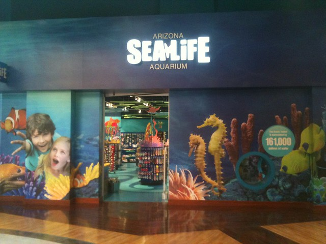 Sea life arizona 1 iphone flickr photo sharing Arizona mills mall aquarium