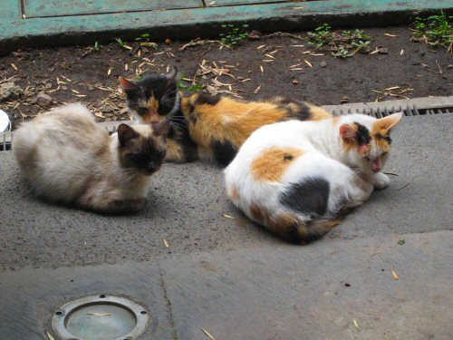 national palace stray cats
