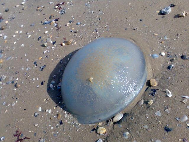 Jellyfish Speed Hump