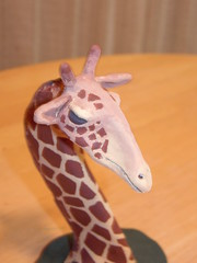 animal, giraffe, giraffidae,
