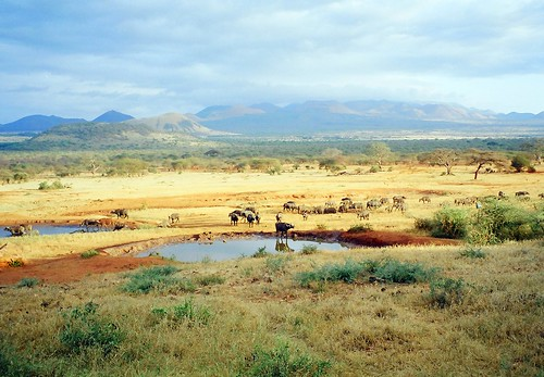 Tsavo West National Park