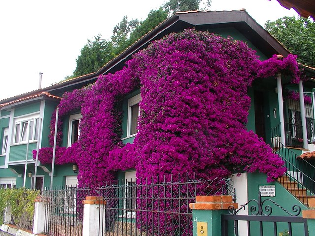 La casa de la buganvilla explore rbolance 39 s photos on flic flickr photo sharing - La buganvilla ...