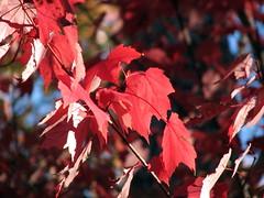 Autumn Colors Lake Crabtree NC 0446