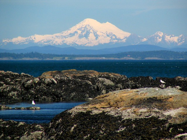Mount Baker from Cattle Point by Dylan Hoen