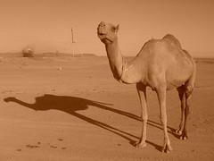 Turkmenistan Desert Sites