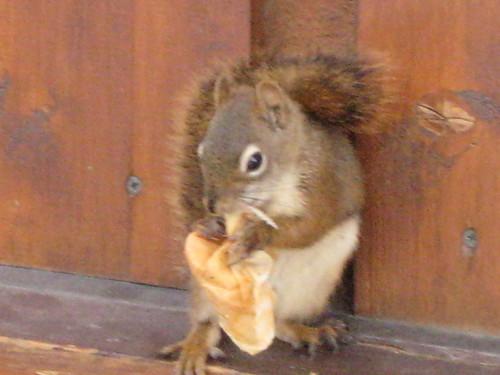 A cute squirrel at McKinley Princess