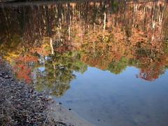 Autumn Colors Lake Crabtree NC 0463