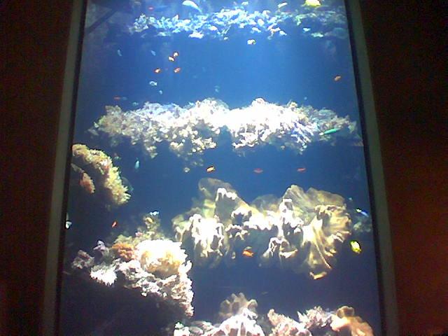 Steinhart Aquarium Explore Jon Gilbert 39 S Photos On
