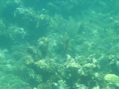 coral reef(1.0), algae(1.0), coral(1.0), sea(1.0), marine biology(1.0), underwater(1.0), shoal(1.0), reef(1.0),