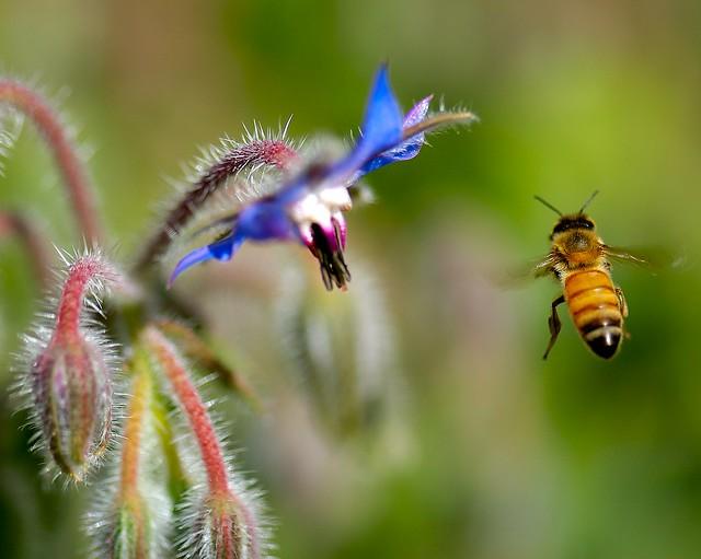 Bee Catch!