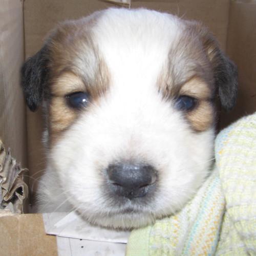 Puppy come...puppy go