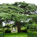 Branching Out at Hidcote Manor Garden