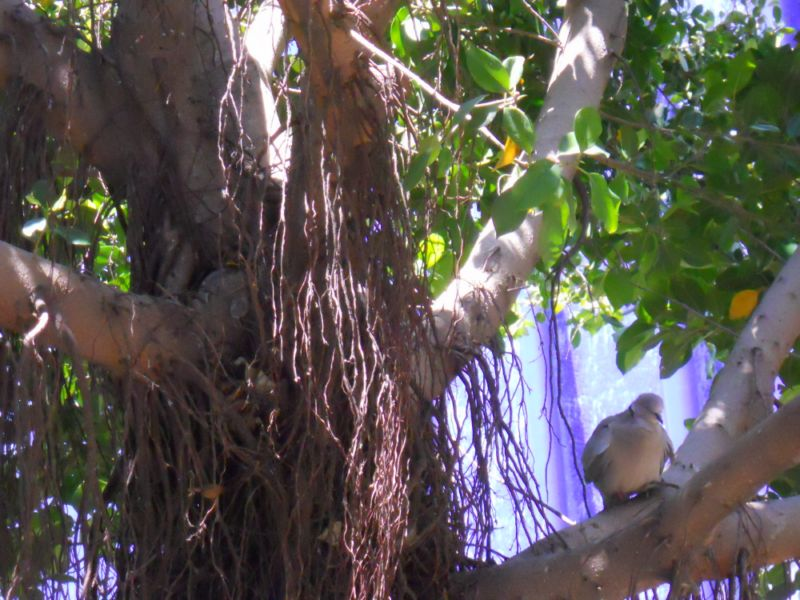Pájaro en jardín
