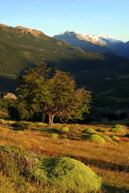 Early Bird - Hiking Towards Fitz Roy - El Chalten - Patagonia - Argentina