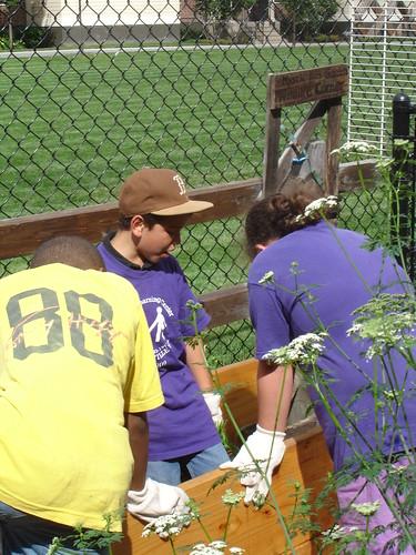 Community Garden Pictures 180