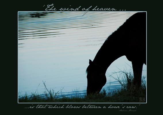 postcard horse drink e