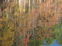 Autumn Colors Lake Crabtree NC 0465