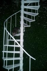 Observatory Raccoon