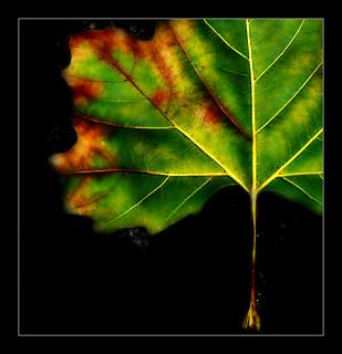 937 Leaf