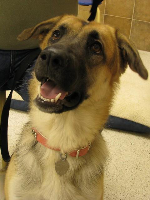Image Result For Petsmart Dog Training