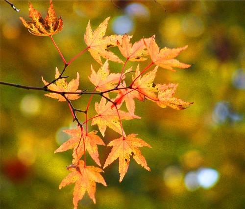 Art in Leaves